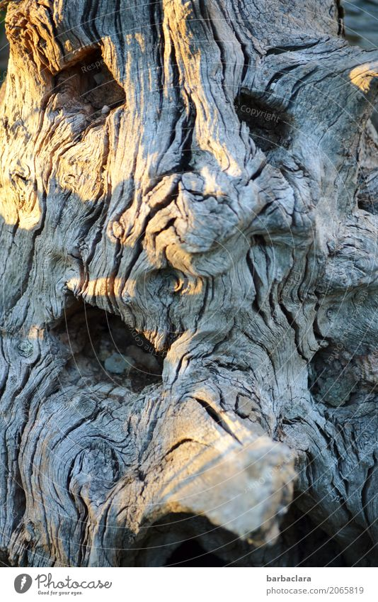 Nature Old Tree Face Emotions Wood Garden Gray Line Change Creepy Whimsical Bizarre Root