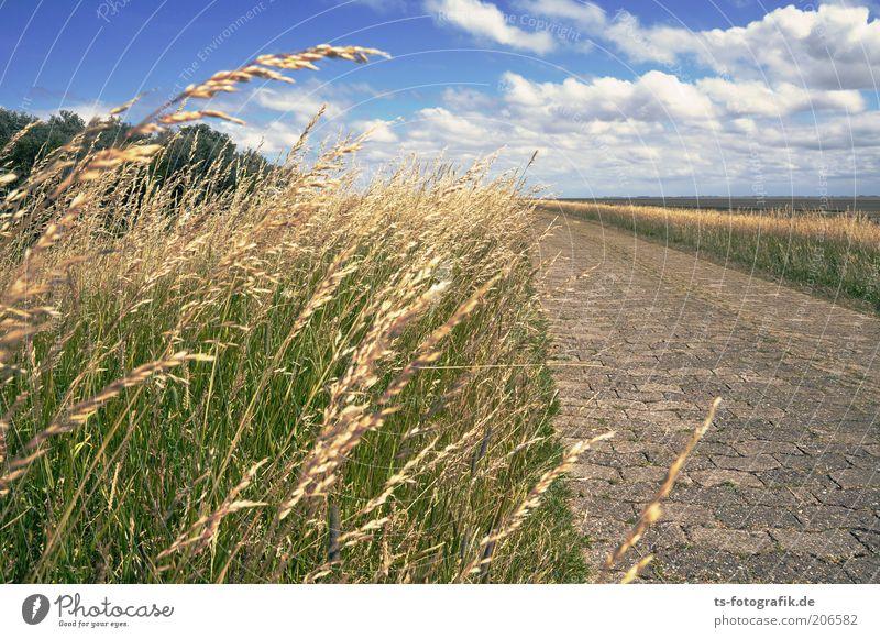 Nature Sky Plant Summer Vacation & Travel Clouds Grass Lanes & trails Warmth Landscape Coast Horizon Trip Island Tourism Footpath
