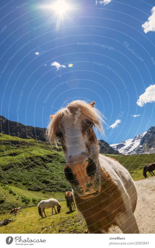Horse Portrait in Alpine Landscape Summer Mountain Hiking Plant Sky Beautiful weather Animal Wild animal Group of animals Observe Discover Looking Esthetic Free
