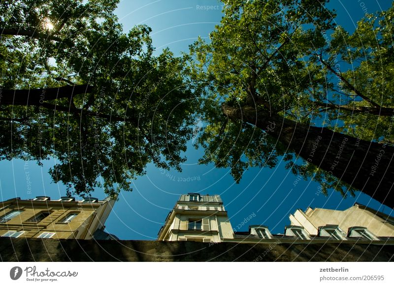 Sky Tree Vacation & Travel House (Residential Structure) Facade Perspective Paris France Upward Tree trunk Beautiful weather Treetop Mole Front side Housefront