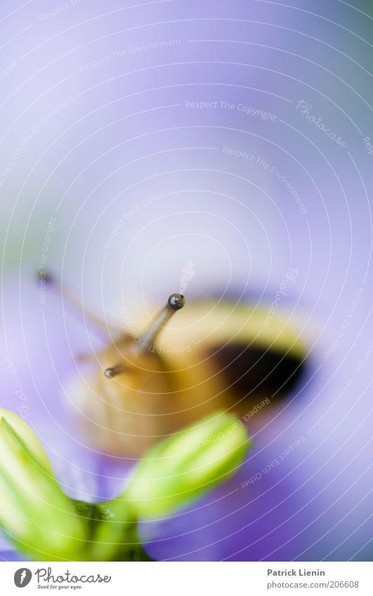 Nature Plant Calm Eyes Animal Environment Observe Wild animal Snail Feeler Macro (Extreme close-up)
