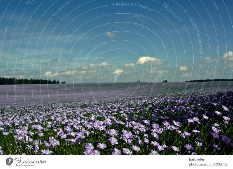 Nature Beautiful Sky Flower Blue Plant Summer Clouds Far-off places Blossom Freedom Landscape Field Environment Horizon Violet