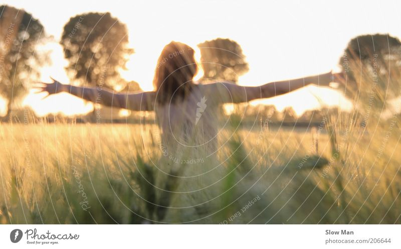 touched by the sun... Feminine Back Arm Naked Cornfield Field Sunlight Sunbeam Woman Disperse Natural Nature Plant Grain field To enjoy Light heartedness Autumn