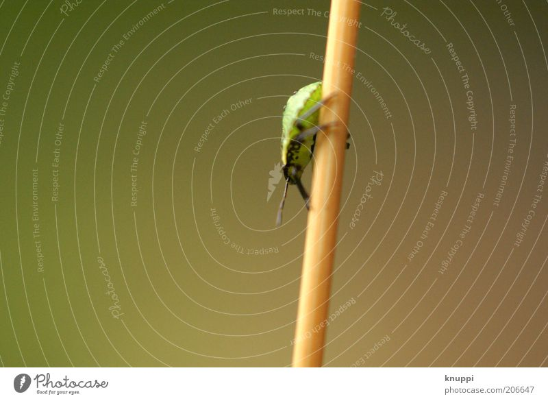 downwards Environment Nature Plant Animal Stalk Beetle Insect 1 Brown Green Downward Isopod Colour photo Subdued colour Exterior shot Close-up