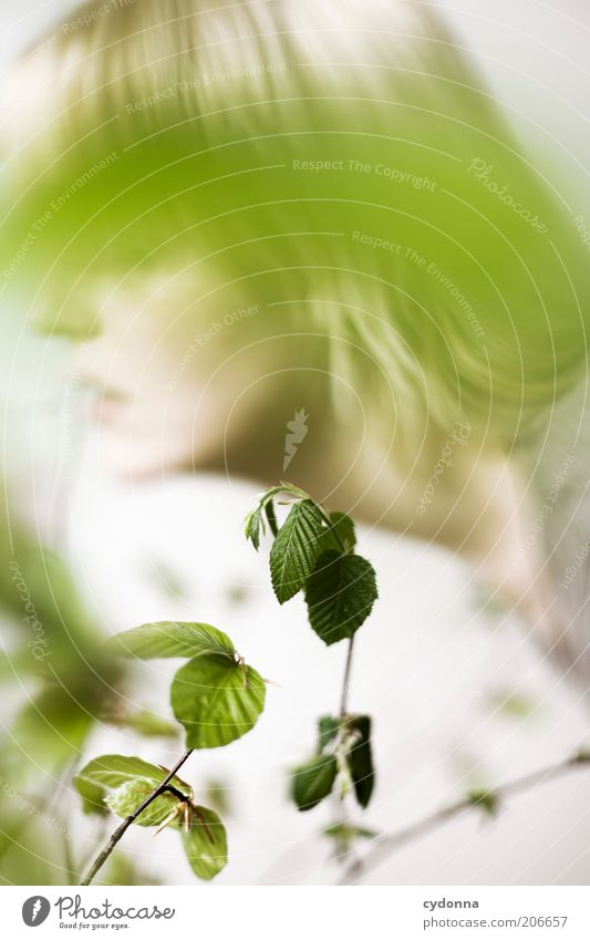 Human being Nature Youth (Young adults) Beautiful Plant Leaf Calm Face Relaxation Life Spring Dream Healthy Blonde Time