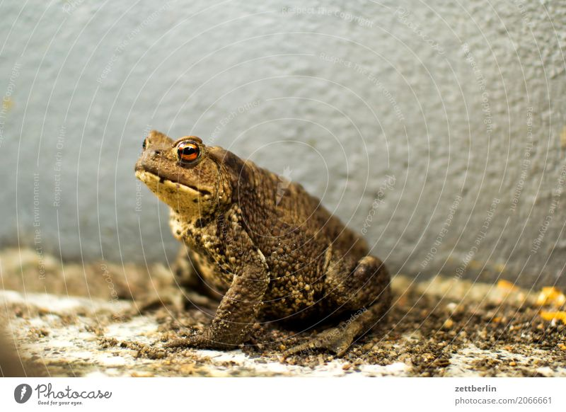 toad Common toad Frog Painted frog Amphibian Newt Reptiles Deserted Copy Space Nature Summer Animal Sit Wait Wall (building) Corner Niche Bad mood