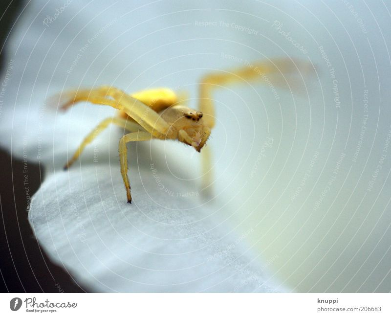 Nature White Plant Summer Animal Yellow Environment Blossom Gold Wait Observe Animal face Insect Discover Disgust Spider