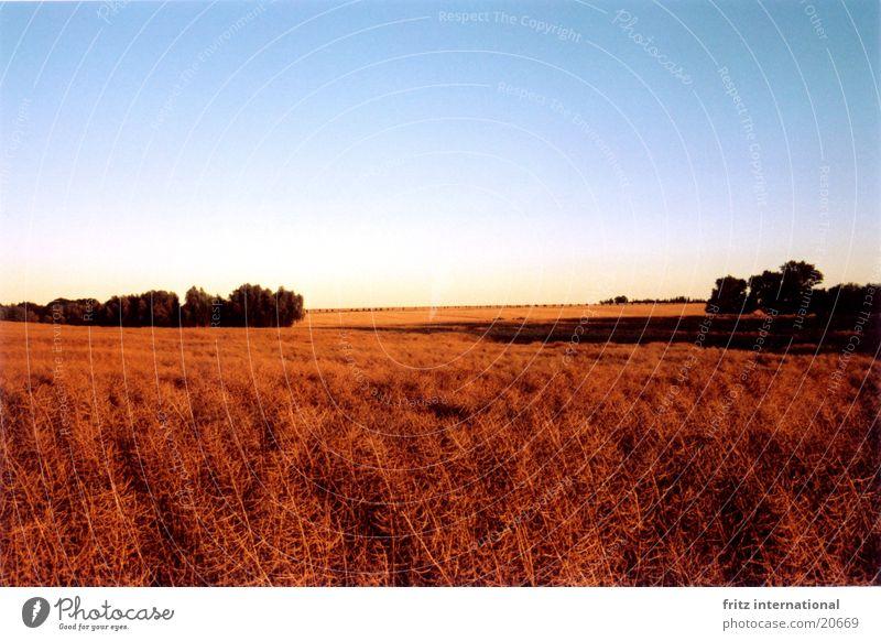 evening field Canola Evening sun Mecklenburg-Western Pomerania Field Sun Shadow