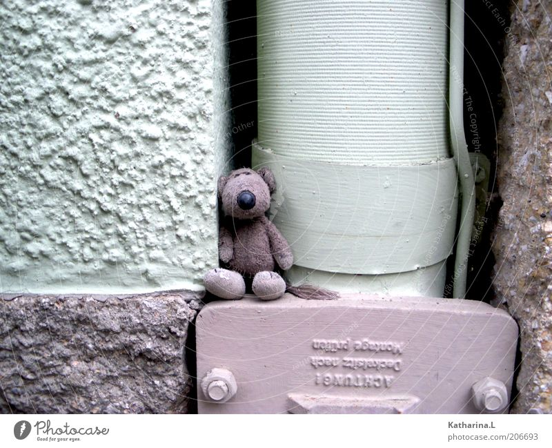 stuffed animal Wall (barrier) Wall (building) Facade Toys Teddy bear Cuddly toy Decoration Collector's item Cute Retro Violet Colour photo Subdued colour