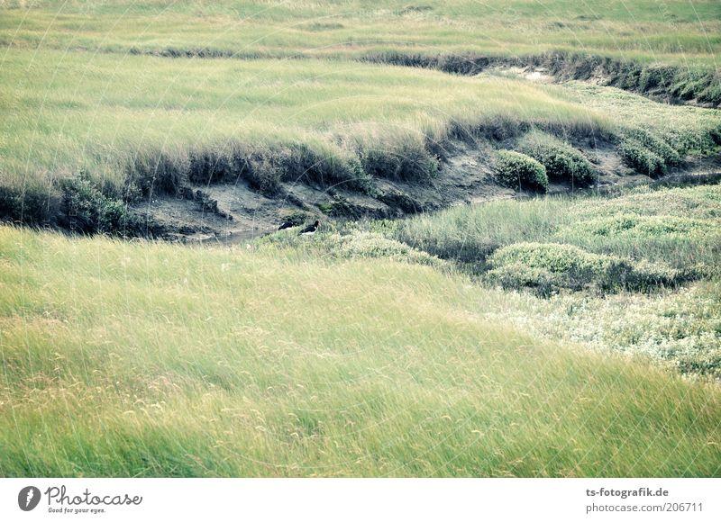 Oystercatcher search screen Environment Nature Landscape Plant Grass Bushes Foliage plant Meadow Coast North Sea Mud flats Tideway North Sea coast National Park