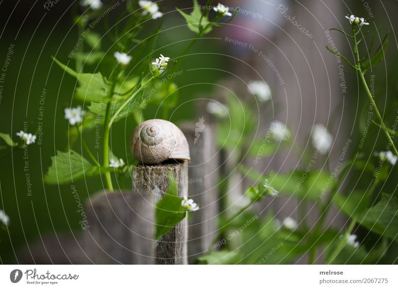 in the country ... Food Snail Mollusk Delicacy Environment Nature Summer Beautiful weather Plant Flower Bushes Blossom Wild plant Part of the plant Garden 1