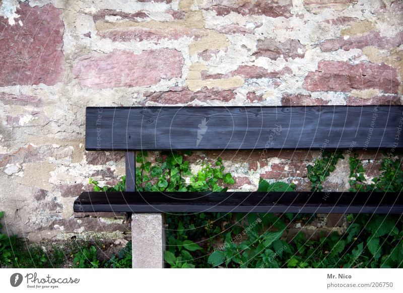 seating Plant Red Wooden bench Wall (barrier) Wall plant Brick Seating Bench Environment Empty Loneliness Deserted Copy Space top Black Detail
