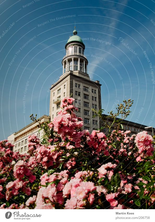 Beautiful Summer Architecture Tower Rose Manmade structures Blossoming Capital city Berlin Flower Friedrichshain Multicoloured Germany Classicism Karl-Marx-Allee Warschauer Straße