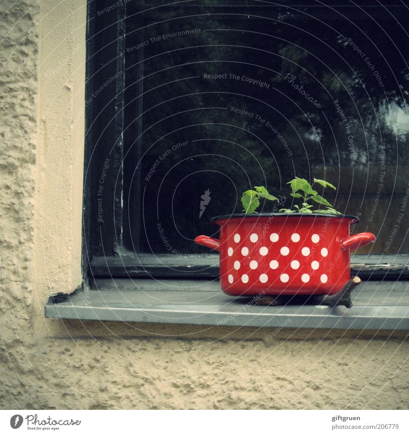 Plant Red House (Residential Structure) Wall (building) Window Wall (barrier) Funny Crazy Facade Growth Point Exceptional Creativity Idea Strange Smart