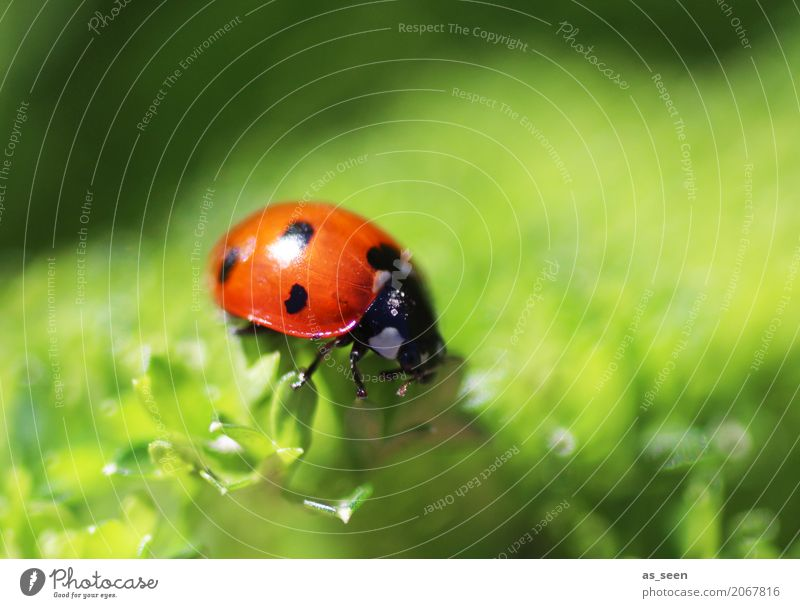 sunbath Harmonious Animal Beetle Ladybird 1 Flying Crawl Simple Small Cute Positive Green Red Emotions Happiness Contentment Spring fever Design Exotic Colour