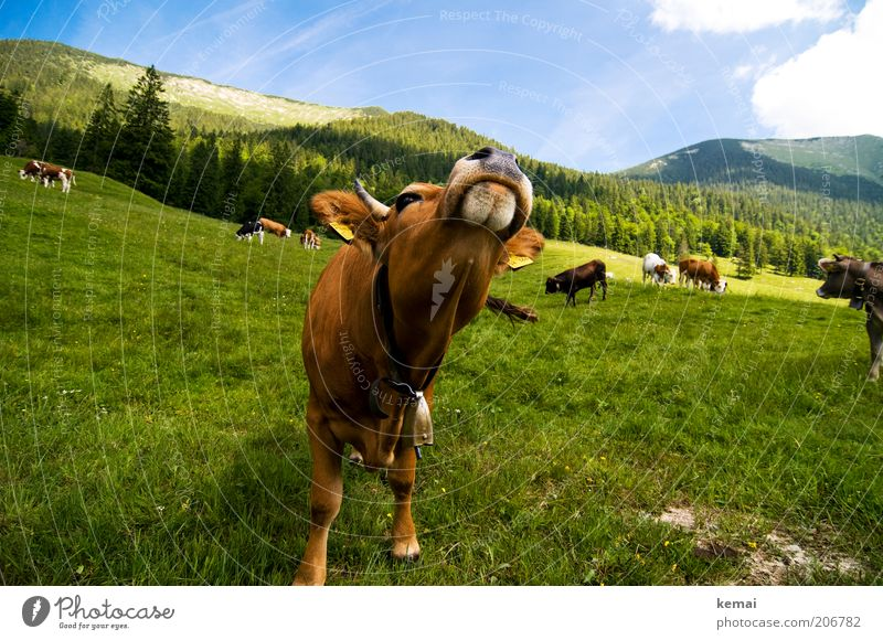 Sky Nature Green Summer Animal Clouds Environment Landscape Mountain Above Grass Head Climate Nose Group of animals Alps