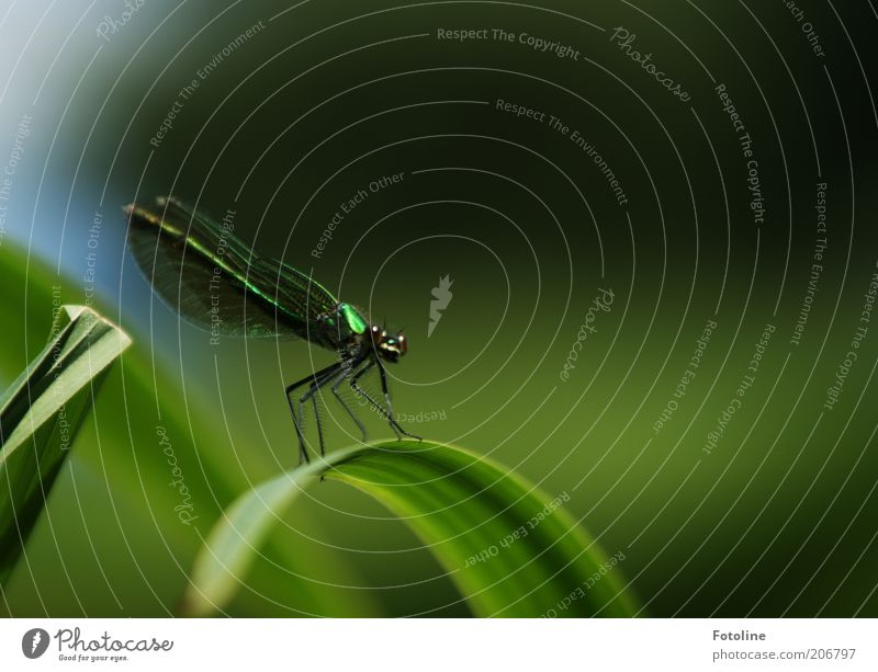 Nature Green Plant Summer Eyes Animal Legs Bright Environment Sit Animal face Wing Insect Wild animal Dragonfly Dragonfly wings