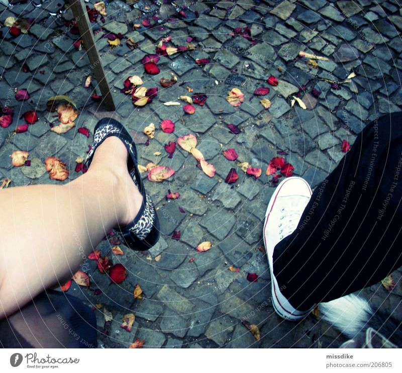 wedding? Feasts & Celebrations Masculine Feminine Friendship Couple Partner Legs Feet 2 Human being Blossom leave Footwear Sneakers Faded Yellow Red