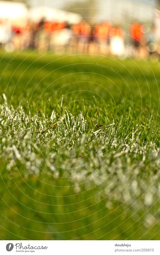 football pitch grass Sports Lawn Grass surface Line Chalk White Signs and labeling Playing field Playing field parameters Football pitch Close-up