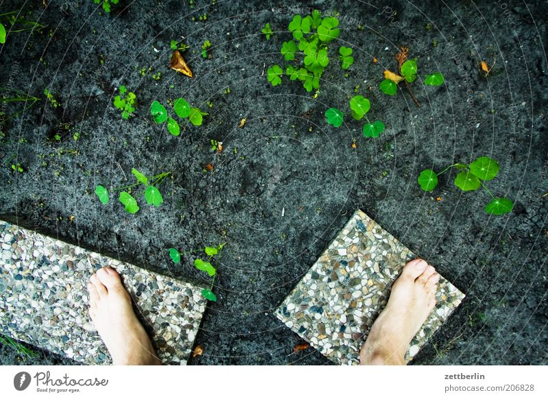 Plant Summer Spring Garden Feet Earth Growth Stand Ground Barefoot Garden Bed (Horticulture) Foliage plant Paving tiles Month Plantlet June
