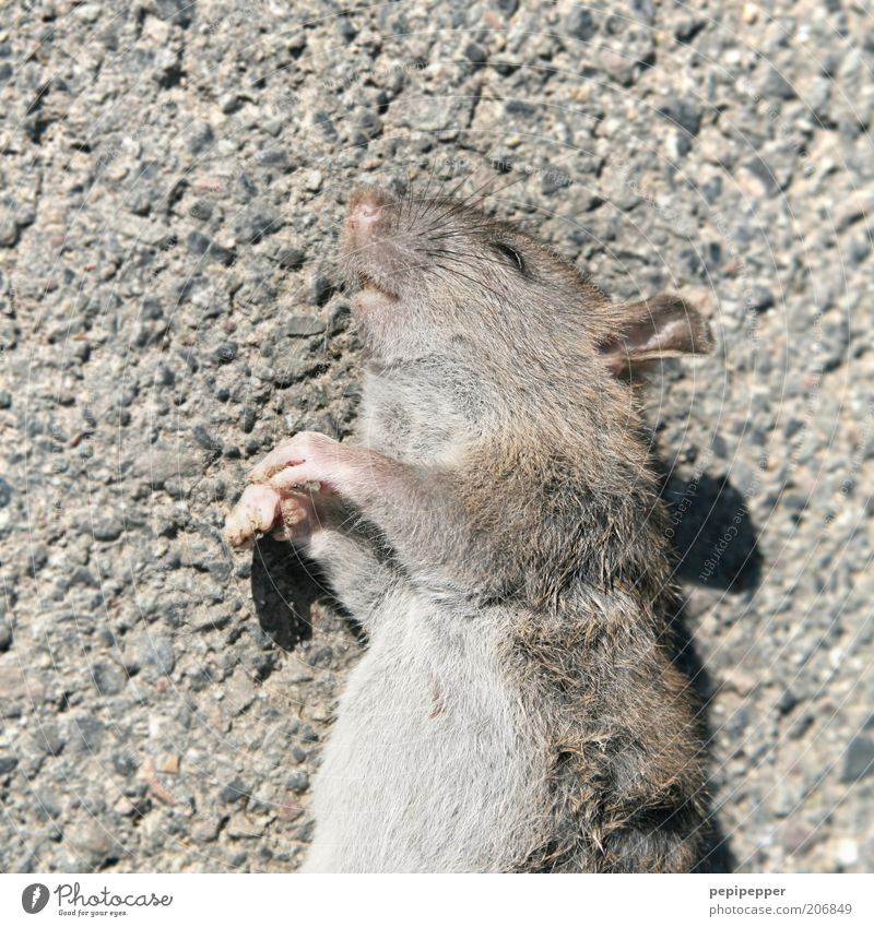mouse death Animal Dead animal Mouse Animal face Paw 1 Death Rodent Colour photo Subdued colour Exterior shot Day Shadow Contrast Animal portrait Upper body