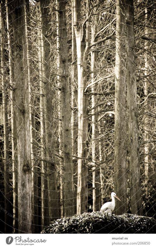 Nature Old White Plant Winter Animal Forest Environment Landscape Brown Bird Tree trunk Bleak Winter activities Stork Leafless