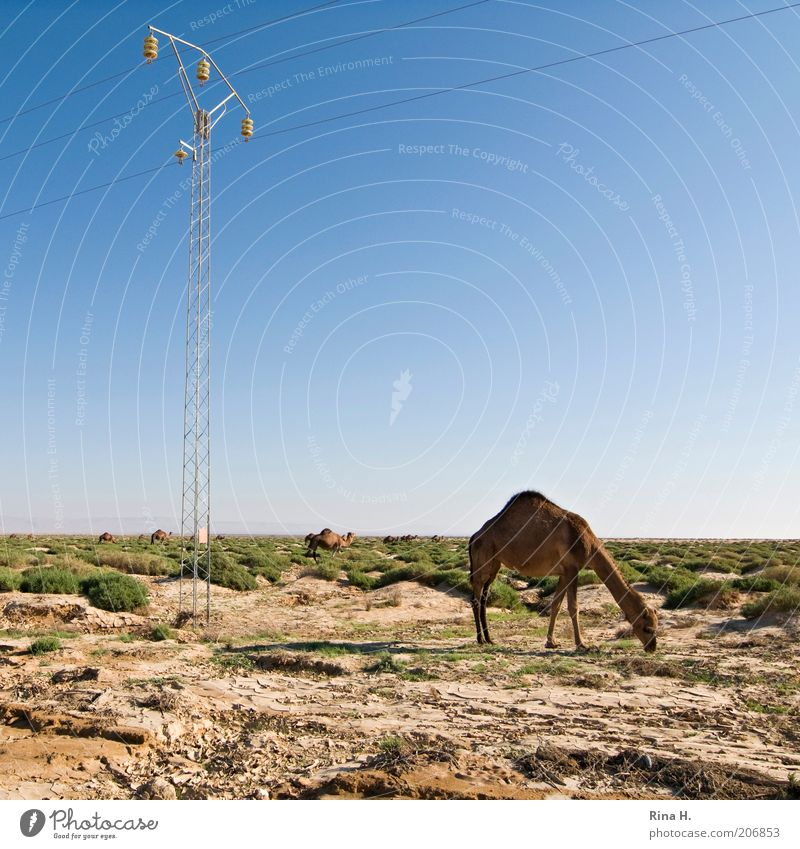 Electricity for all Vacation & Travel Tourism Adventure Far-off places Energy industry Environment Nature Landscape Earth Sand Sky Horizon Grass Bushes Tunisia