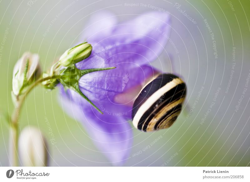 snail mail Environment Nature Plant Animal Air Summer Flower Blossom Foliage plant Sit Snail Bluebell Beautiful Mucus unpopular Snail shell To feed ribbon screw