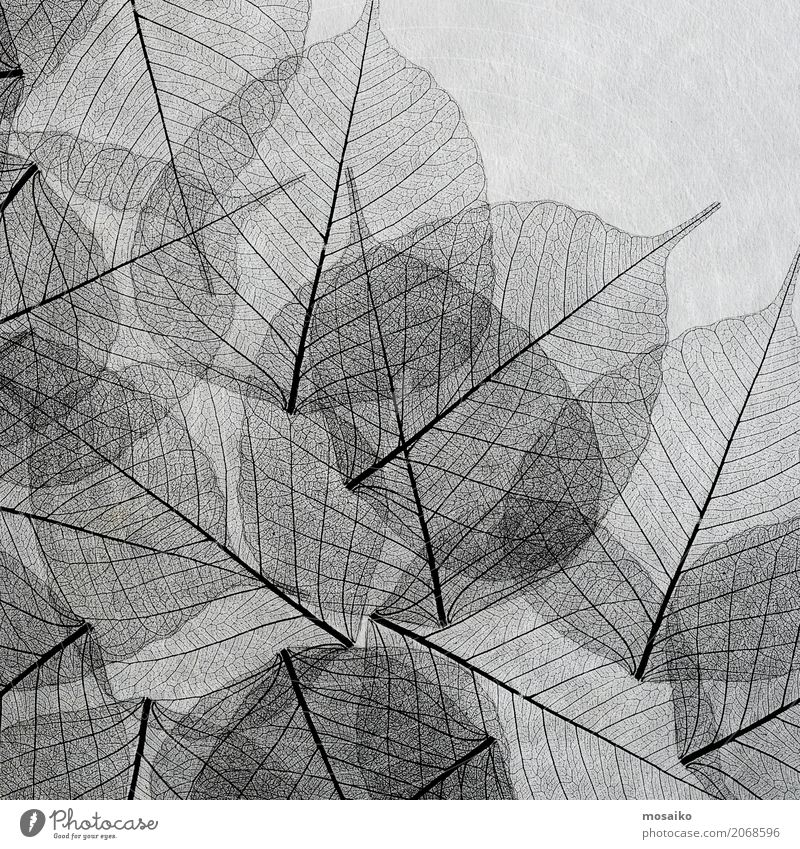 black silhouettes of transparent leaves Style Design Garden Decoration Nature Plant Spring Summer Autumn Winter Leaf Fashion Ornament Line Natural Retro Green