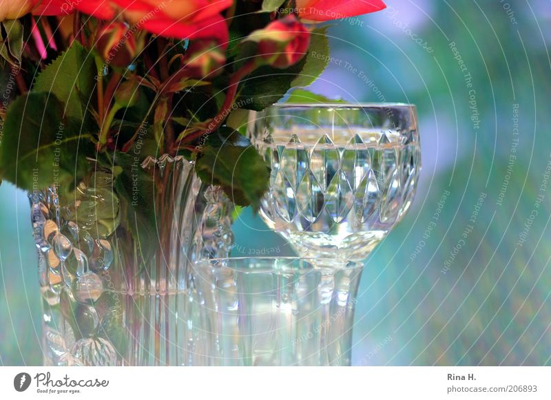 Silence against the light Cold drink Glass Style Rose Esthetic Positive Blue Green Red Moody Joie de vivre (Vitality) Water Still Life Vase Colour photo