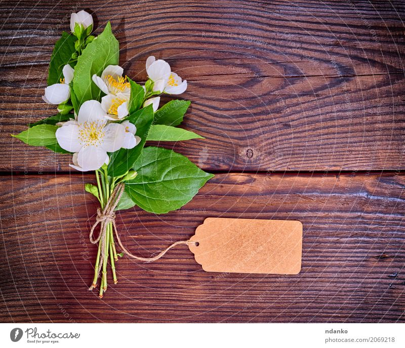 bouquet of blooming white jasmine Nature Plant Colour Green White Flower Leaf Yellow Blossom Natural Wood Above Bright Fresh Seasons Bouquet