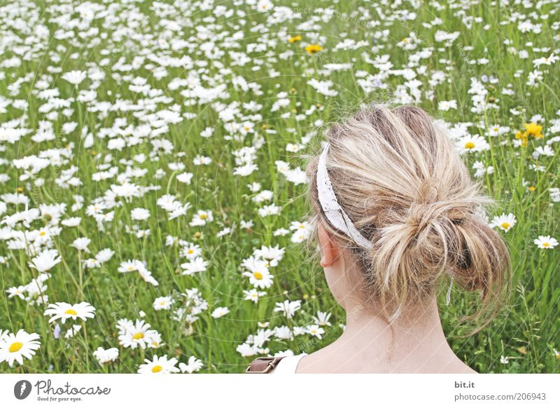 Youth (Young adults) Green Summer Meadow Feminine Head Hair and hairstyles Spring Dream Blonde Observe Blossoming Marguerite Young woman Flower meadow