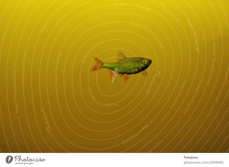 Water Animal Environment Yellow Eyes Natural Lake Free Wild animal Wet Fish Elements Float in the water Near Pond Fin