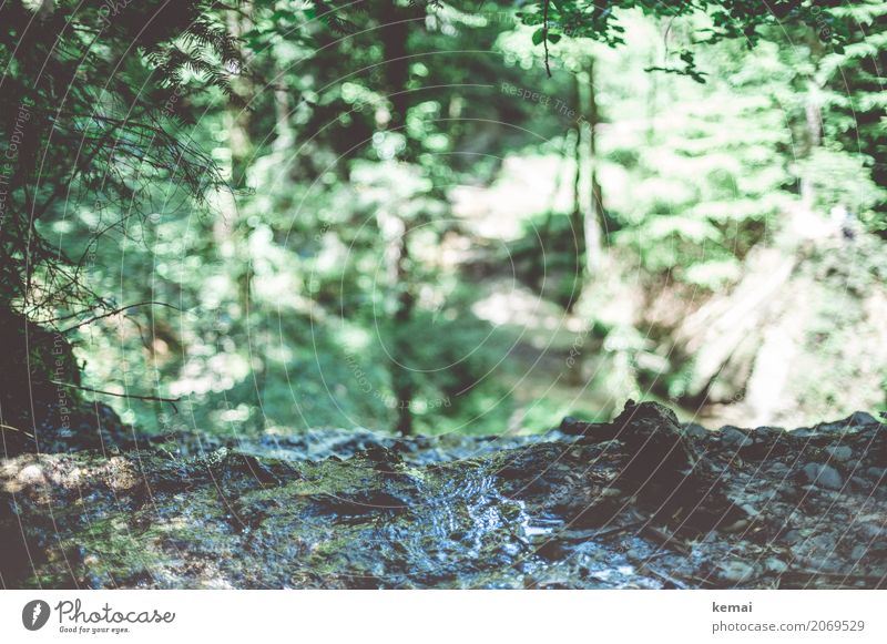 abyss Environment Nature Water Sunlight Summer Beautiful weather Forest Rock Authentic Fresh Green Flow Waterfall Edge Canyon Colour photo Subdued colour
