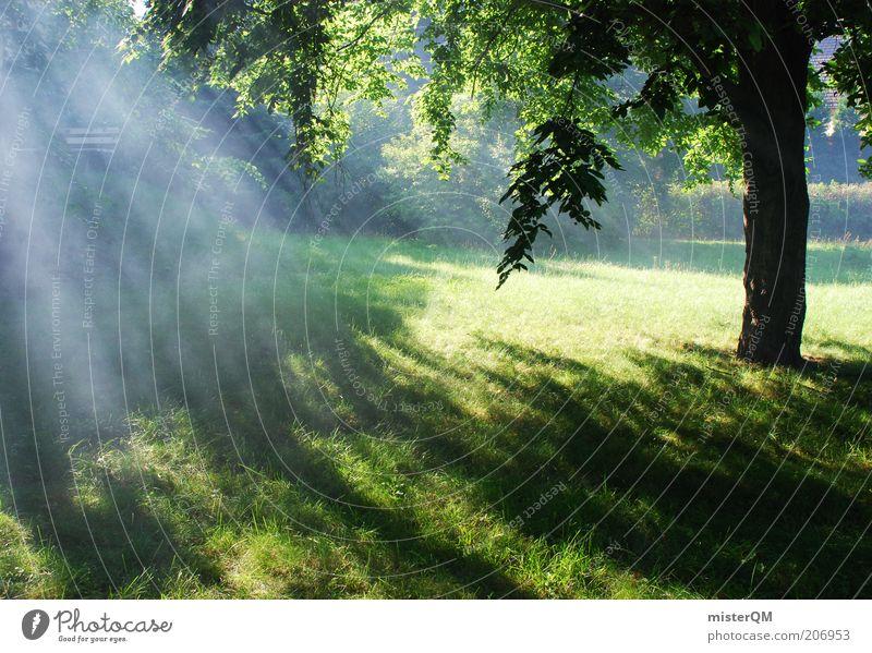 Somewhere Beautiful. Environment Nature Landscape Plant Elements Esthetic Contentment Diffuse Belief Phenomenon Heavenly Sublime Romance Clearing Smoke Fog
