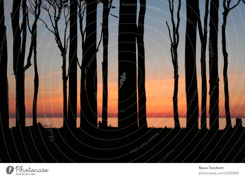 Nature Beautiful Sky Tree Ocean Blue Plant Red Summer Beach Calm Black Dream Landscape Moody Coast