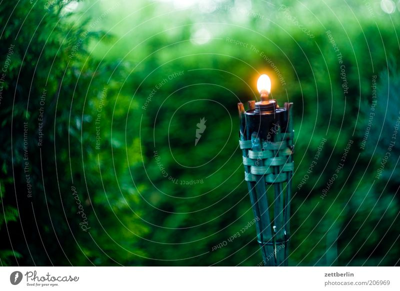 In the evening in the garden Garden Hedge Dark Candle Torch Flame Light Green Evening Calm Lamp Lamp oil Garden festival Nature Oil lamp Storm laterne Burn