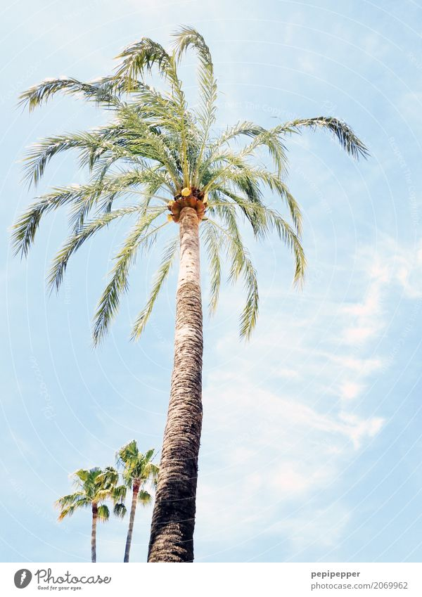 Sky Plant Summer Tree Leaf Clouds Beach Environment Coast Wood Beautiful weather Attachment Exotic Palm tree Wild plant