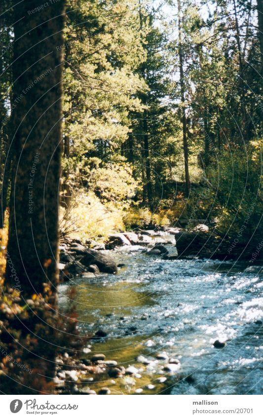 Water and Light Autumn Brook Sawtooth Mountains