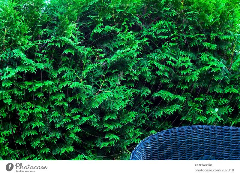 Hedge plus armchair Garden Border Fence Boundary Closed Armchair Chair Cane chair Backrest Chair back Green Structures and shapes Arrangement Leaf green Conifer
