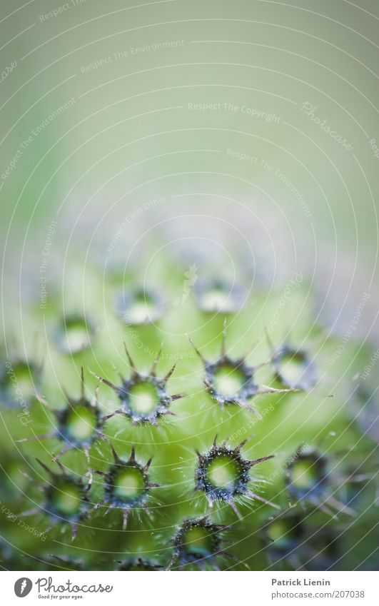 Nature Flower Green Plant Summer Blossom Environment Round Exotic Macro (Extreme close-up) Thorn Thorny Light Wild plant