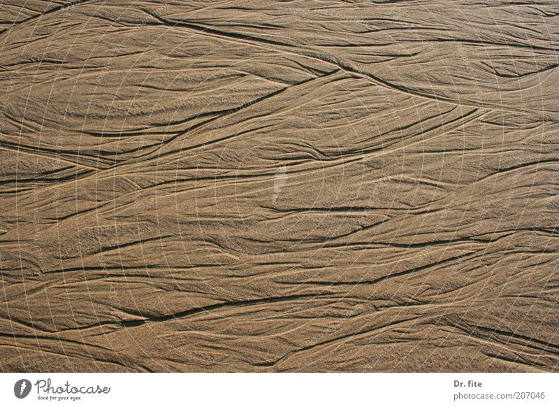 Traces in the sand Earth Sand Beach Colour photo Exterior shot Pattern Structures and shapes Day Light Shadow Contrast Background picture Neutral Background