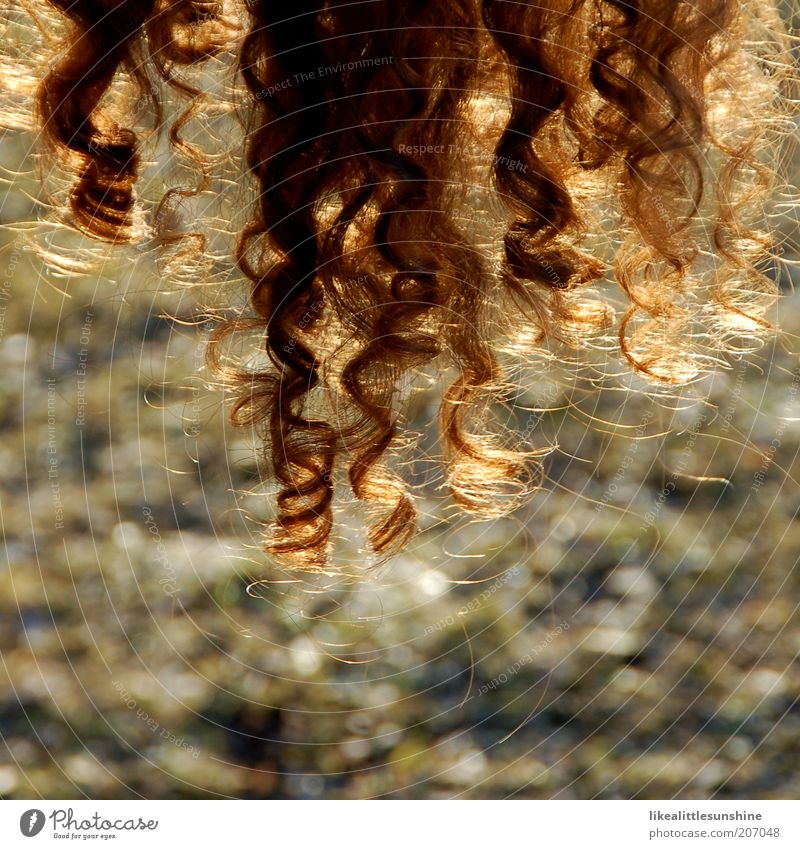 Hair and hairstyles Brown Curl Brunette Spiral Dry Red-haired Curly Shock of hair Human being Hairdressing X-rayed Women´s hair