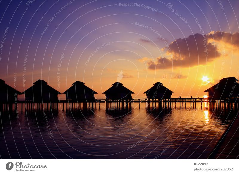 Paradise says good night! Far-off places Summer vacation Sun Ocean Island Maldives Water Sky Clouds Sunlight Relaxation Exotic Longing Dream Asia Indian Ocean