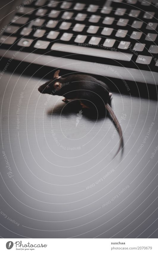 keyboard and mouse Keyboard Computer Modern Work and employment Office modern communication Workplace Advancement Old fashioned Write Mouse Animal Pet Rodent