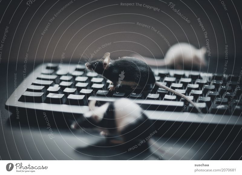 keyboard and mice Keyboard Computer Modern Work and employment Office modern communication Workplace Advancement Old fashioned Write Mouse Animal Pet Rodent