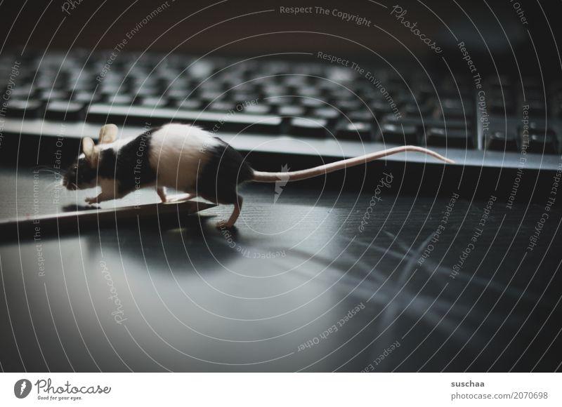 Animal Dark Funny Fear Office Cute Curiosity Ear Pet Animalistic Desk Mouse Mammal Keyboard Workplace Pen