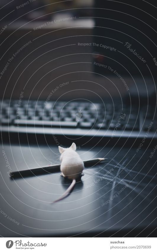 mouse and pencil Mouse Animal Pet Mammal Curiosity Office Animalistic Funny Keyboard Desk Workplace Computer Cute Diminutive Ear Fear Caution Disgust Pen