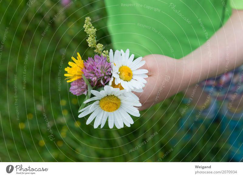 Human being Child Hand Flower Leaf Joy Blossom Friendship Growth Gift Help Bouquet Toddler Sustainability Kindergarten Parenting