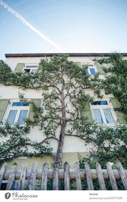 tree house Living or residing Garden Nature Plant Sky Summer Beautiful weather Tree Branch Village House (Residential Structure) Detached house Facade Window